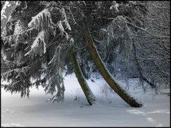 sne skud14