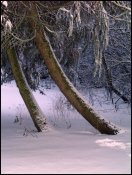sne skud15