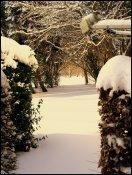 sne skud16