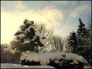 sne skud17