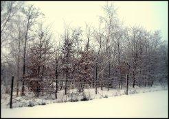 sne skud5