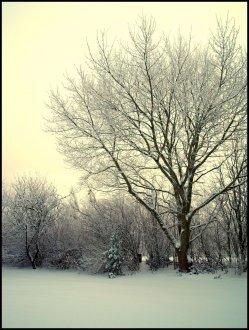 sne skud9